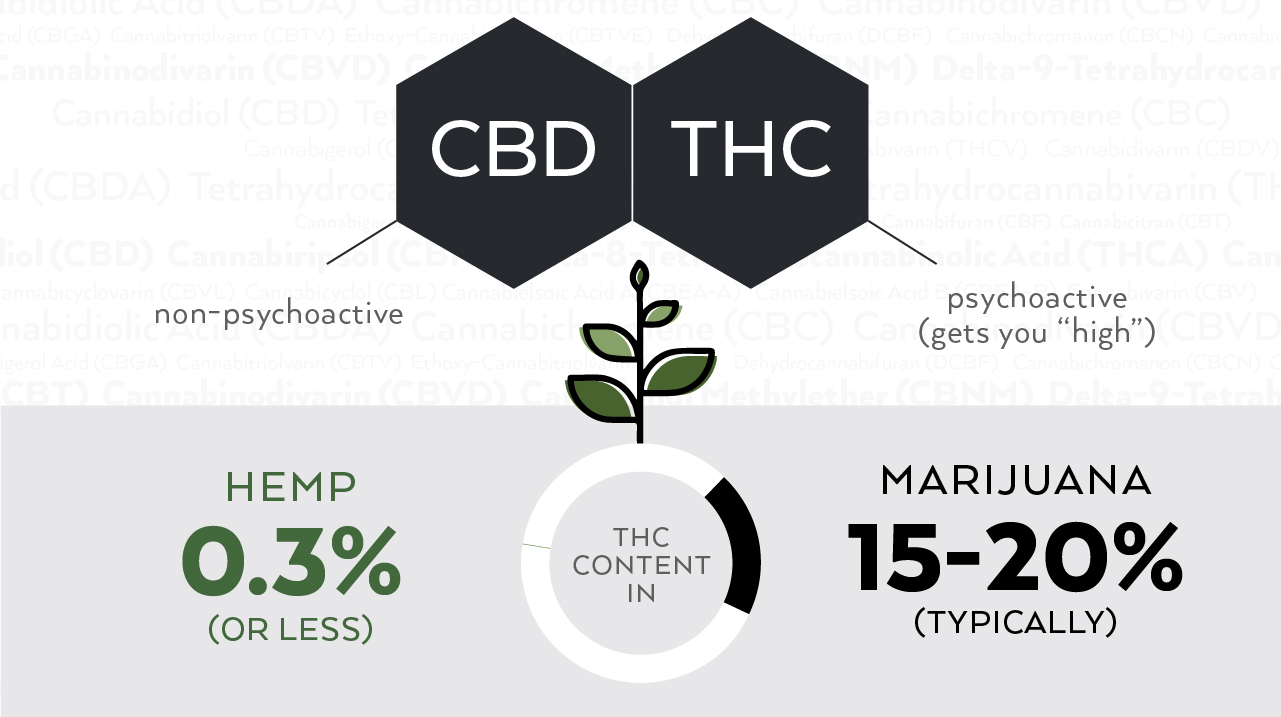 Do not confuse Hemp and CBD oil anymore, here is the difference